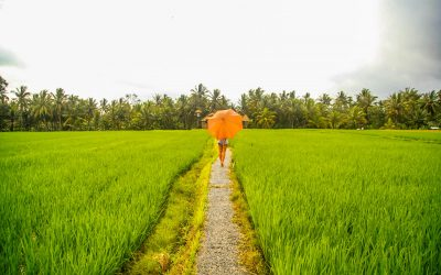 How to Find the Local Rice Fields Bali – Avoid the Tourist Trap!